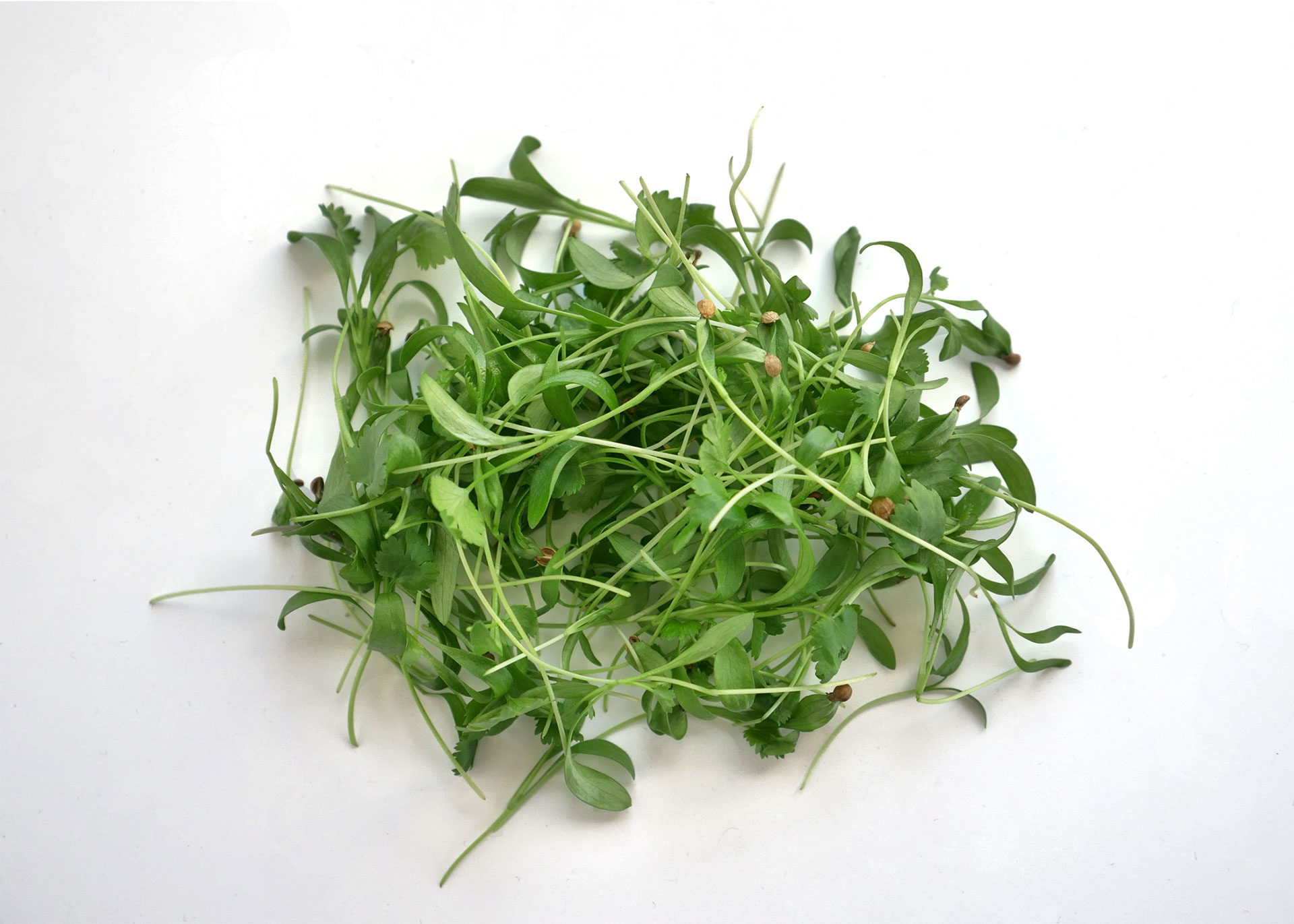 Cilantro microgreens by Infinite Harvest