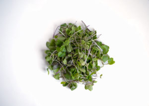 Wild Cabbage Microgreens
