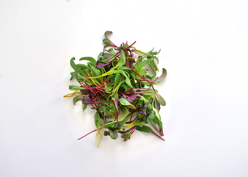 Rainbow Mix Microgreens Flavor Profile
