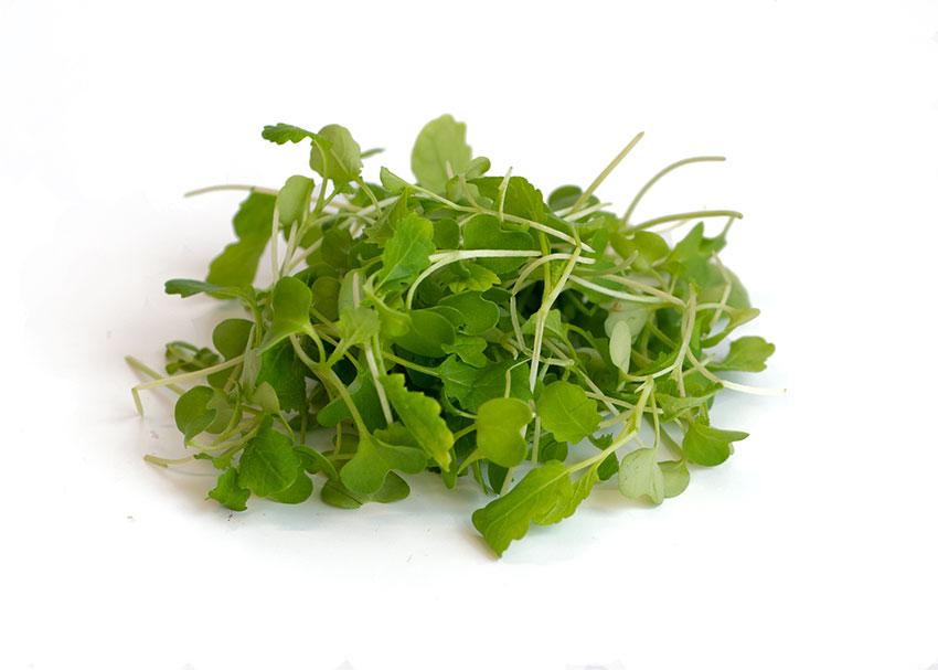 Wasabi Microgreens Flavor Profile