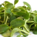 Starflower (Borage) Microgreens