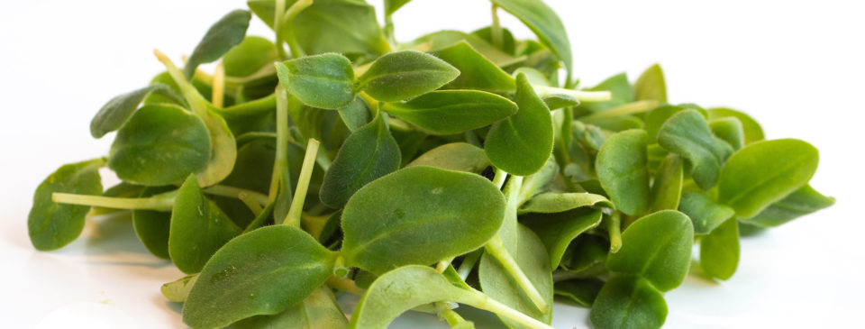 watercress micro greens by Infinite Harvest