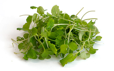 Buy Hydroponic Green Produce Onlineo Online Shopping