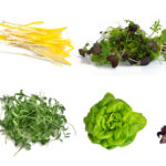 Hydroponically Grown Green Produce