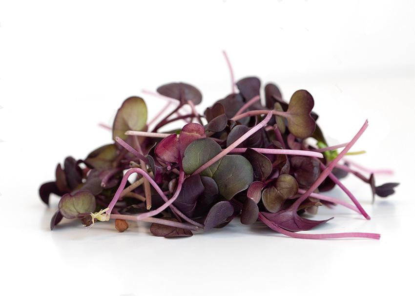Red Rambo Radish microgreens by Infinite Harvest