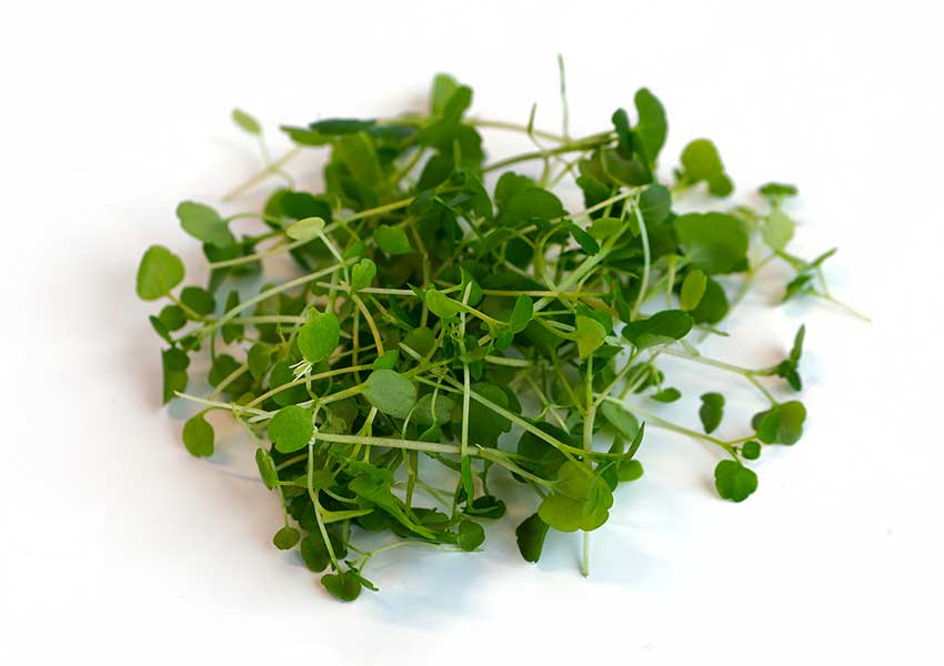 Watercress Microgreens Benefitsby Infinite Harvest