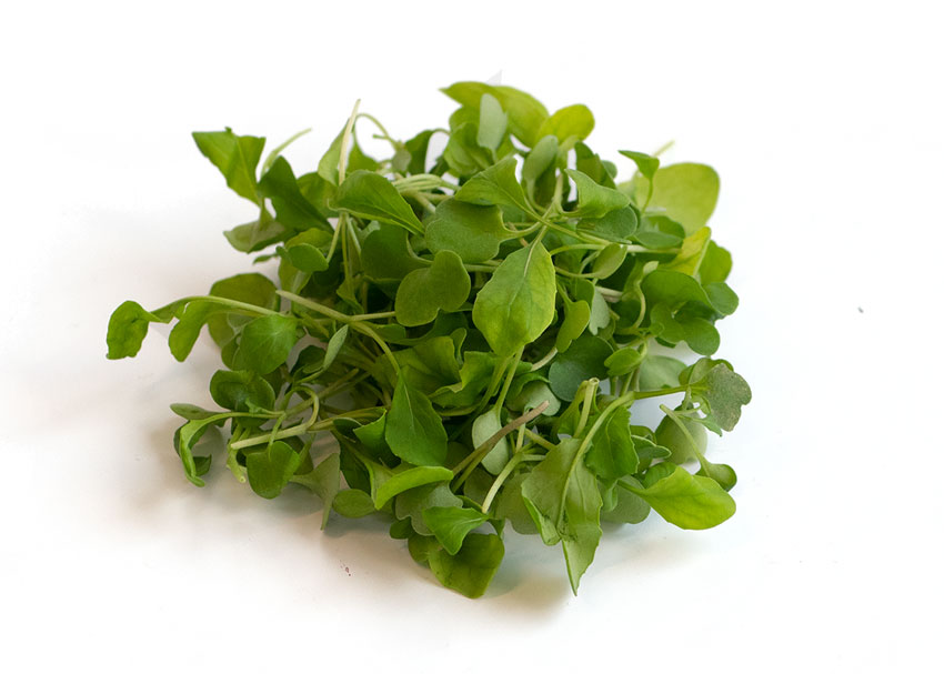 As a borderline mild-to-spicy microgreen variety, Infinite Harvest's Arugula is used in salads and other microgreens recipes that include a slight horseradish note.