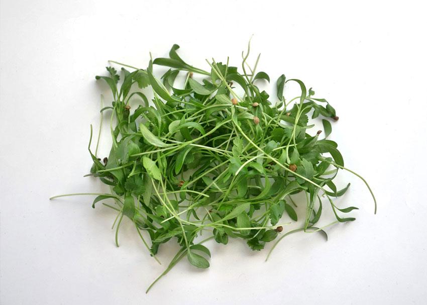 Cilantro Microgreens Flavor Profile