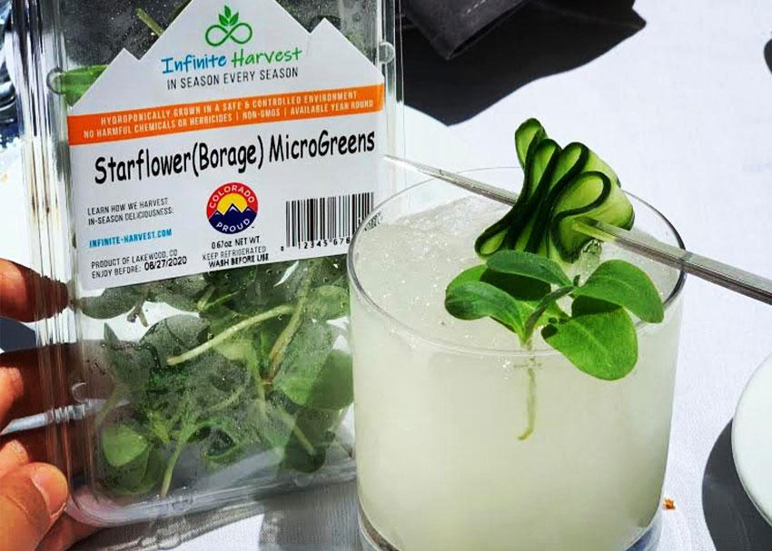 Starflower Microgreens Recipes
